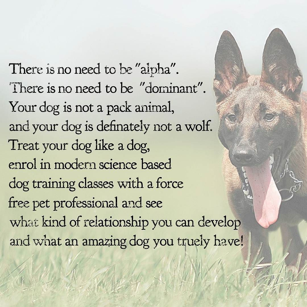There Are Lots Of Myths About Dog Training Around The Most