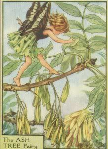 Flower Fairy Names (Nephele's Anagrams) - | Fairies | Flower fairies