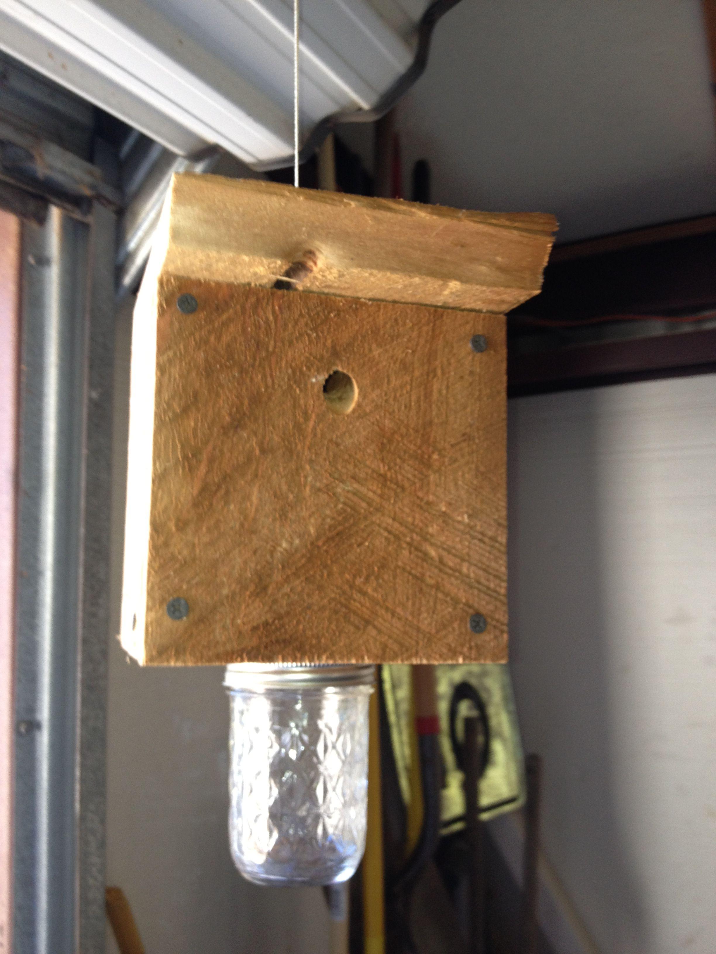 Carpenter bee trap bottle opener wall carpenter bee