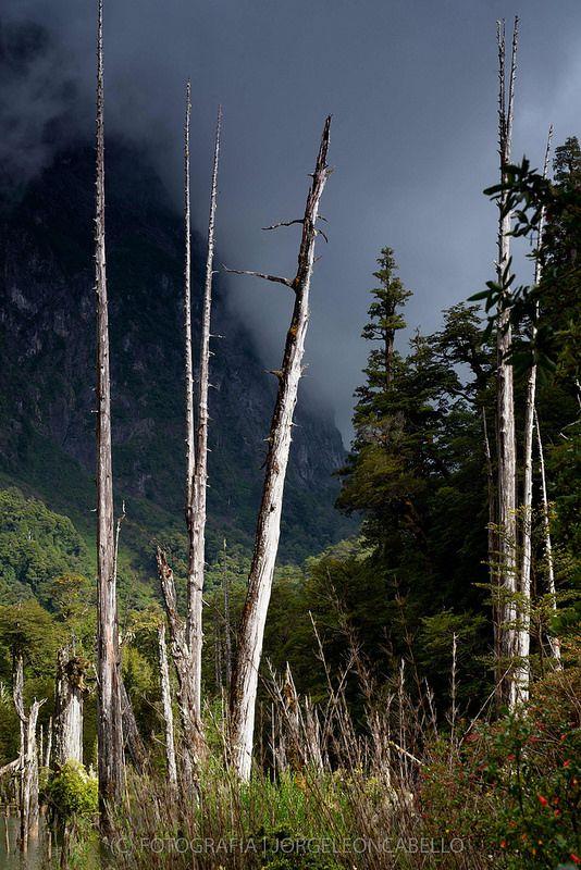 Luz de mañana en Laguna Alerces - Parque Tagua Tagua (Patagonia - Chile)