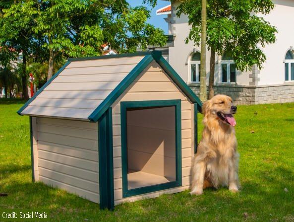 Outdoor Dog Kennels Large Dog House Dog Houses Extra Large Dog
