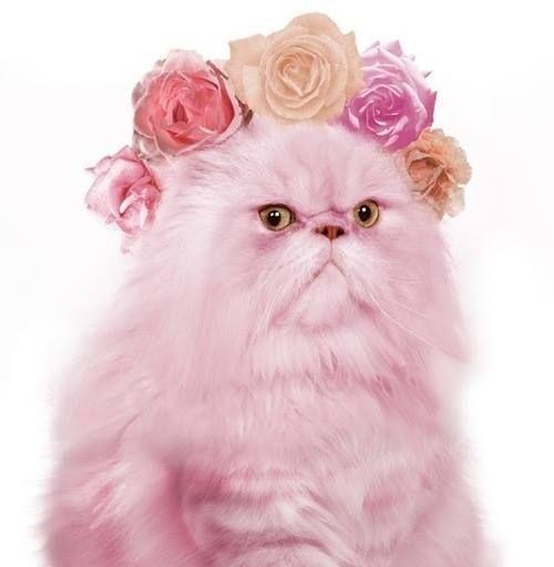Le chat lartiste pinterest pastels pink cat flower crown flowers in their coats toni kami mightylinksfo