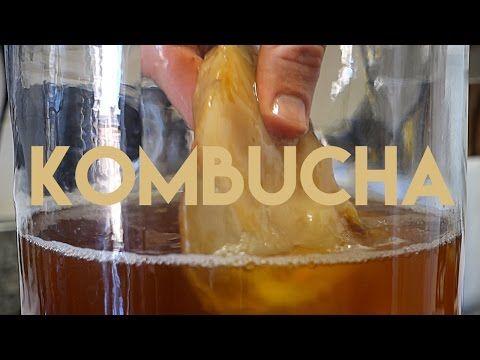 how to grow a scoby kombucha