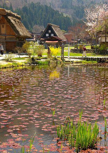 La bassa de les fulles / The pond of the leaves