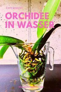 Homöpathie für die Orchideen