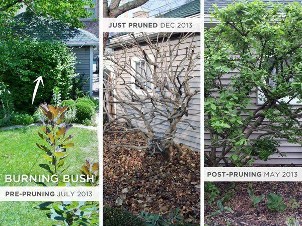Landscaping For A Late Spring Rather Square Spring Landscaping Landscape Garden Landscaping