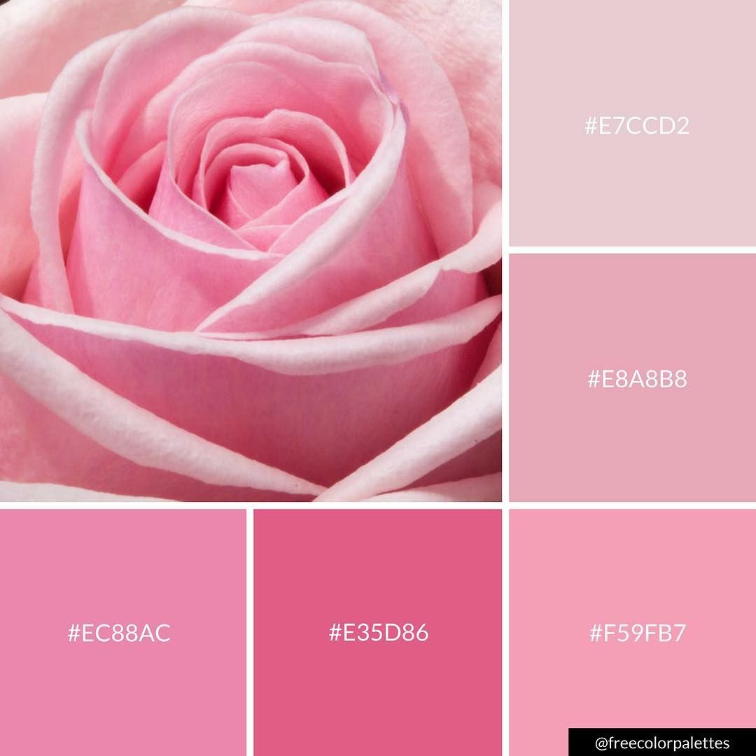 Baby Pink Rose | Color Palette Inspiration. | Digital Art Palette ...