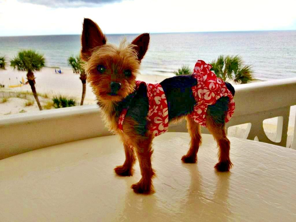 Cute canine models her new bikini.