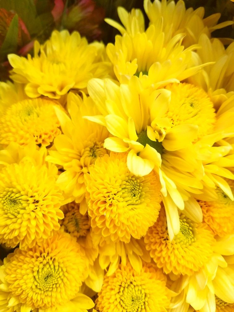 Yellow mum flower bouquet, chrysanthemums and daisies ...