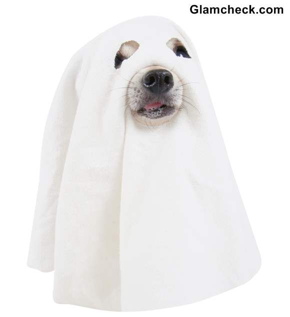 Halloween Diy Ghost Costume For Your Dog Ghost Costume Diy Diy