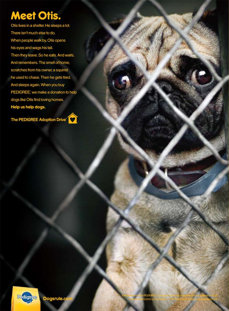 Pug Eyes For World Peace Pets Animals Funny Animals