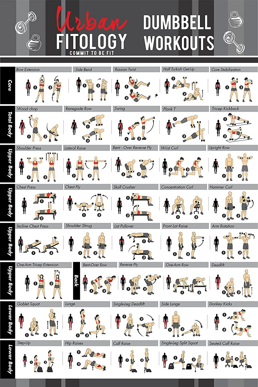 Urban Fitology Dumbbell Exercise Workout Poster for Men and Women - 40 Exercises | Double Laminated Full Body Fitness Guide | Perfect Workout Routine Chart for Bodybuilding & CrossFit | 20 X 30