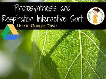 Photosynthesis and respiration sort digital resource this is an interactive slide activity where students sort terms facts and diagrams related to photosynthesis or cellular respiration ccuart Gallery