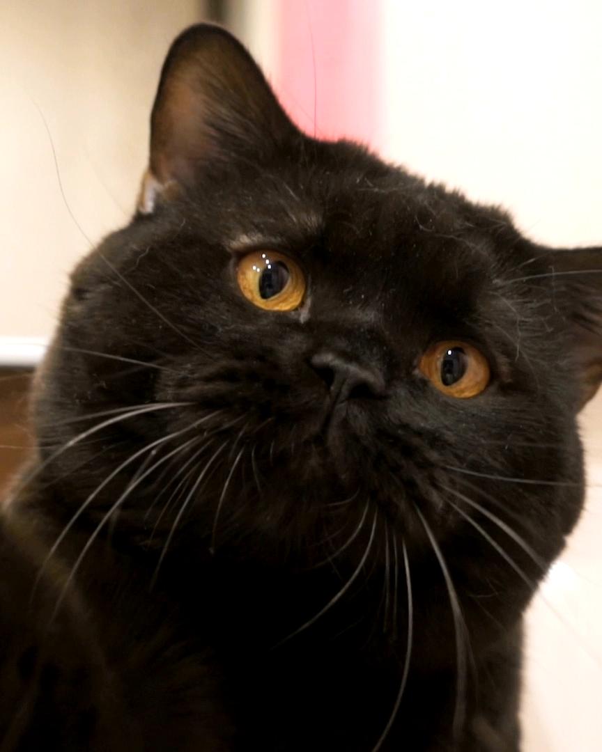 Photo of Finden Sie das richtige Futter für Ihre Katze. Natürlich & gesund 💚