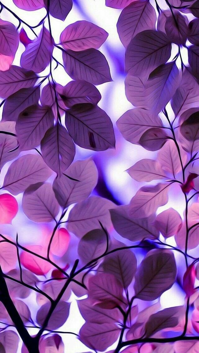 Leaves With Color Filter Nature Iphone Wallpaper Purple Wallpaper Phone Wallpaper