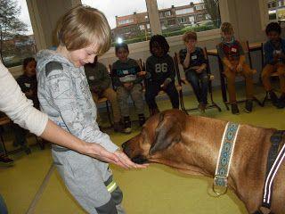 L2 Veltwijck Jungleklas: Hoe moet ik voor een hond zorgen?