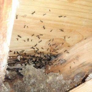Ants On Kitchen Floor