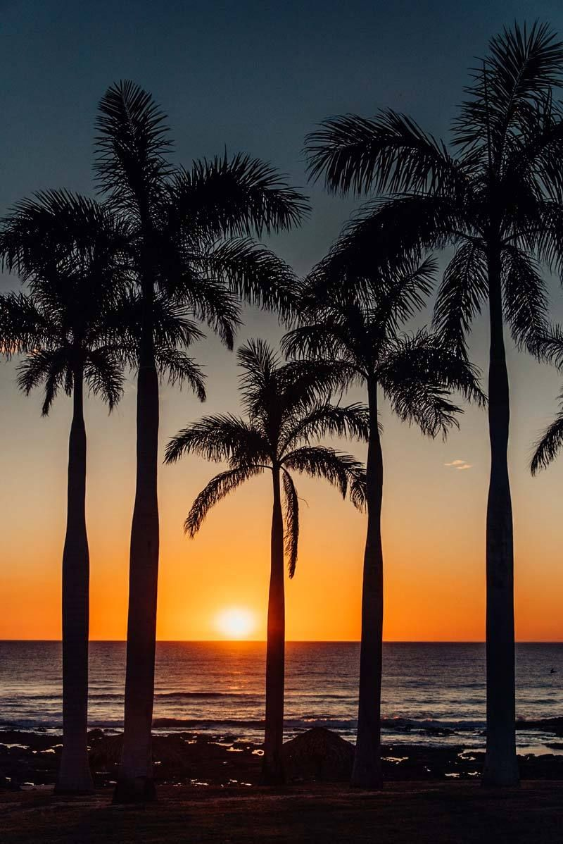 560e7cd821637 Palm trees overlooking the Pacific Ocean during sunset in Costa Rica. Fine  art beach photo print. palm tree silhouette, sunset palm trees sunset, ...