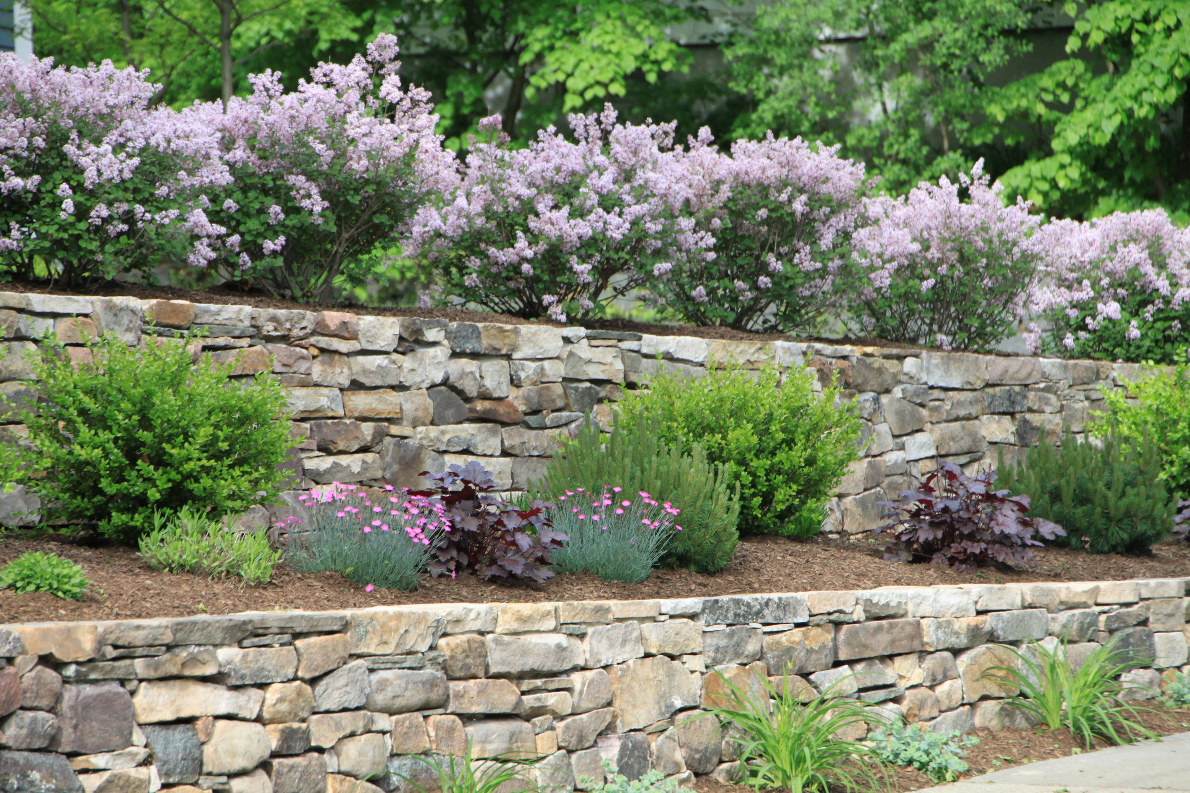 Dwarf Korean Lilac Hedge accents Natural Fieldstone ...