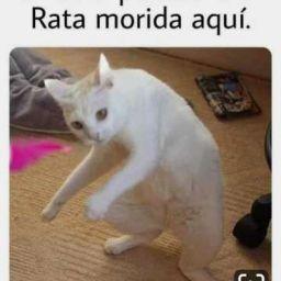 Theestebanxd In 2020 Funny Spanish Memes Funny Animal Memes Animal Memes