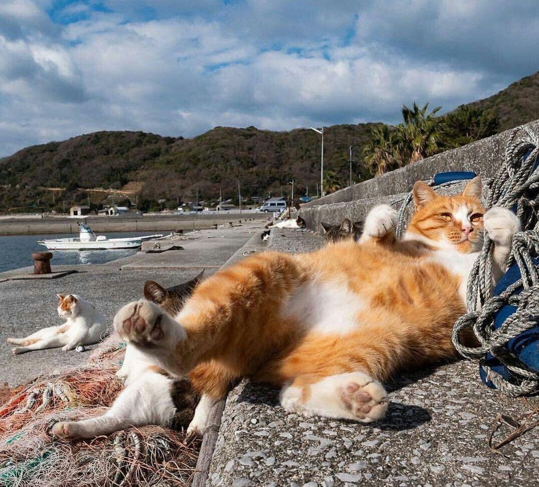 Лето смешные картинки 3 кота на пляже