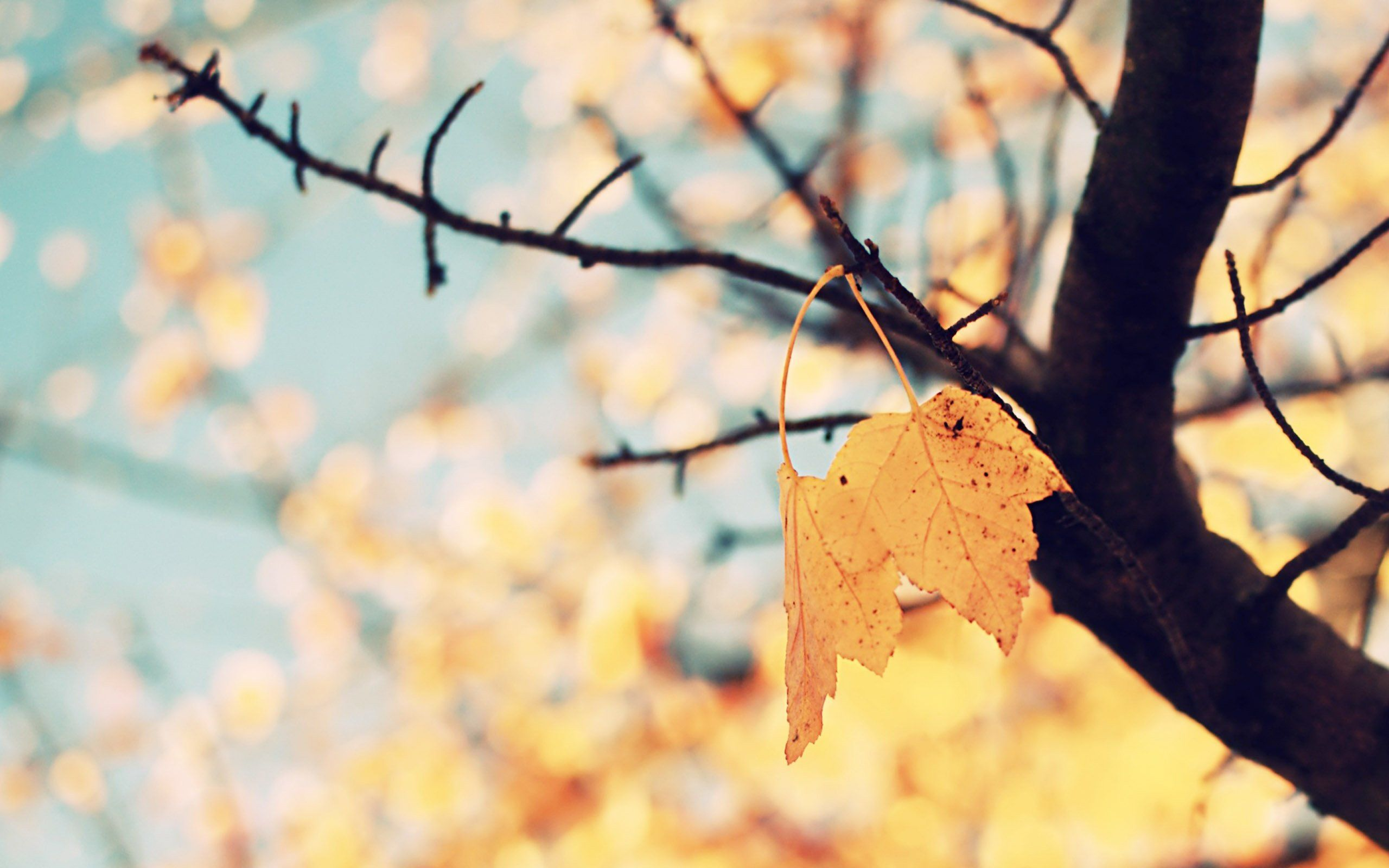 Iphone wallpaper tumblr fall - Backgrounds Cool Tumblr Iphone Last Leaf Left