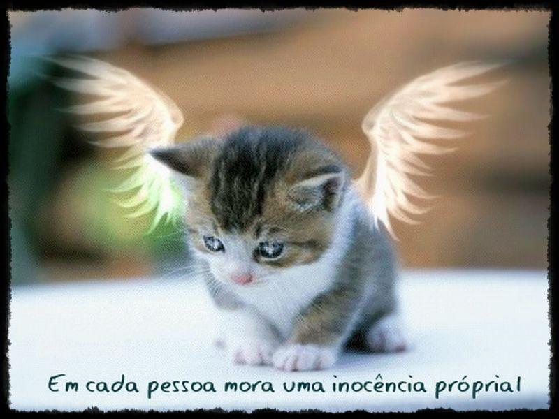 5gifjpg 800600 Gatinhos Pinterest