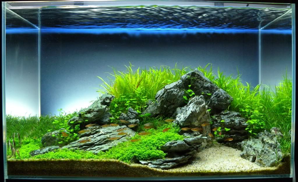 64L Iwagumi Scape By Icepotato89 (user From Tankedplant.net). Gorgeous!