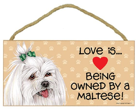 Maltese Dog Breeds Dog Sign Dog Breed Sign 5 X 10 Wooden Sign Love Is Being Owned By A Maltese Maltese Dog Breed Maltese Dogs Dog Signs