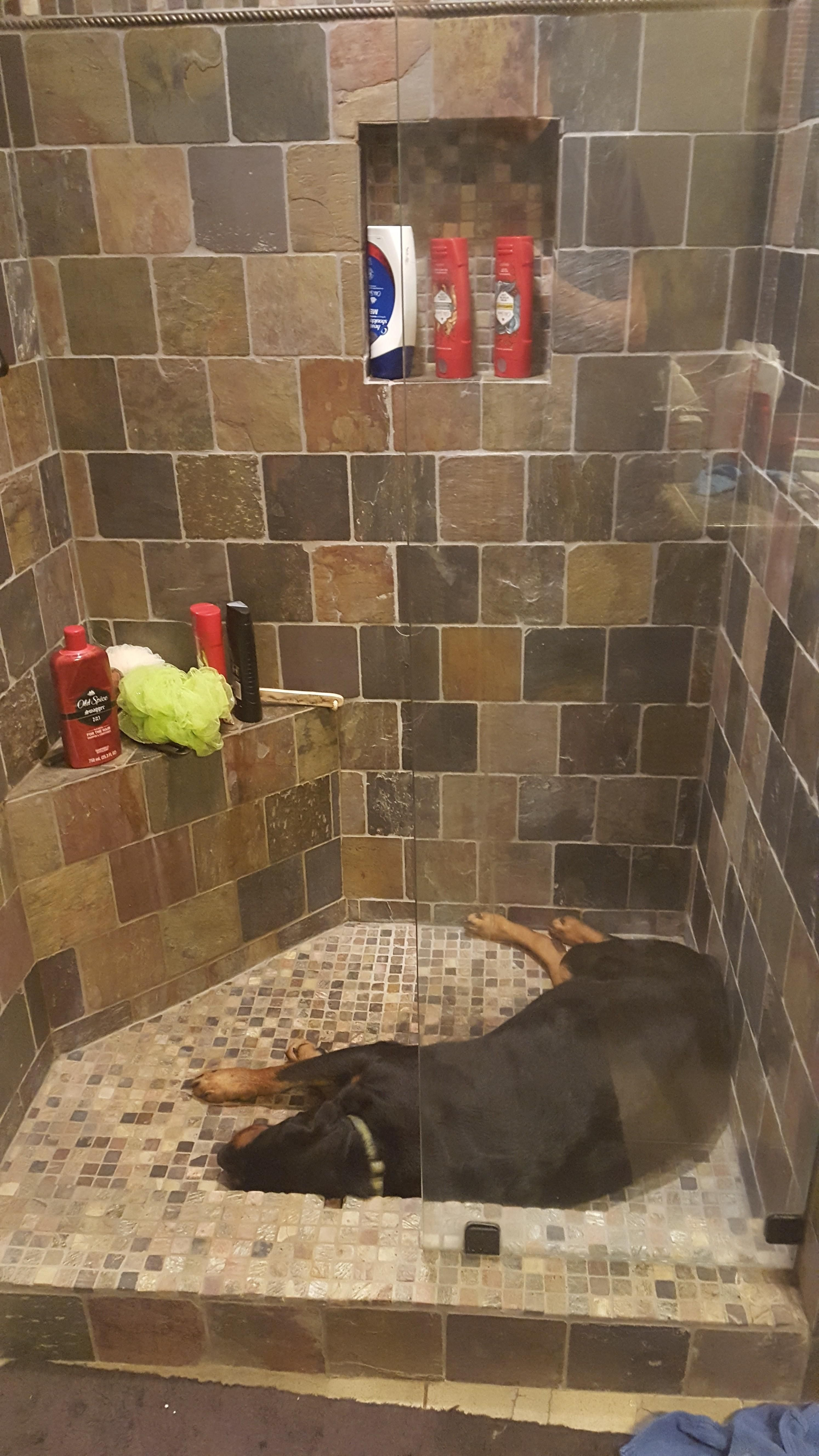 Went to take a shower before bed and found her like this. http://ift ...