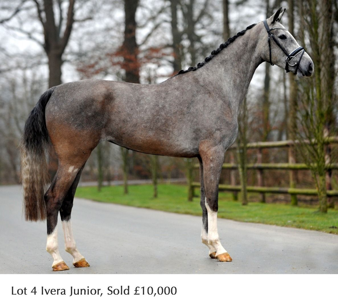 Horse Sale Google Search Sport Horse Irish Sport Horse Horses