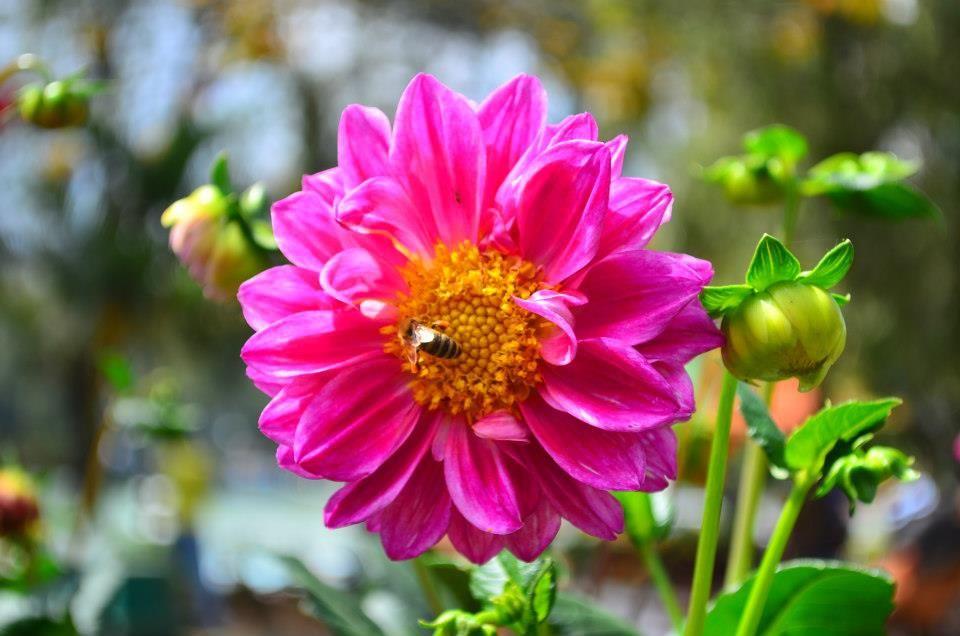 Pin by Beckey Douglas on dahlias Flower photos, Dahlia
