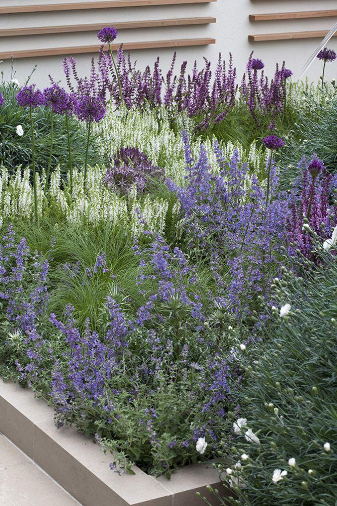 tl_files/garden-and-flowers/blog-images/Nepeta borderpakket 0507-6601LR.jpg