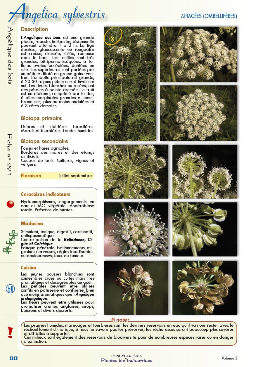 encyclopedie des plantes bio indicatrices volume 2 livres. Black Bedroom Furniture Sets. Home Design Ideas
