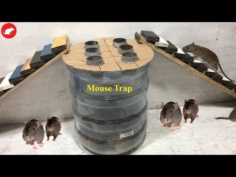 Idea Mouse Trap/Water Bottle Mouse Trap/How to make A ...
