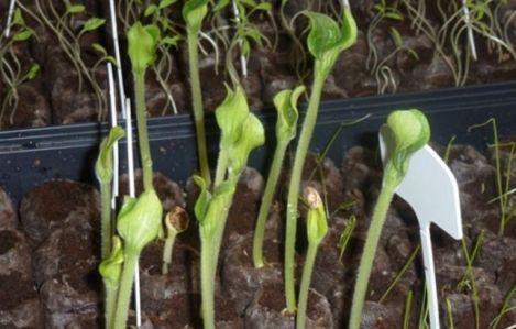 Organic Garden seedlings and watering patterns