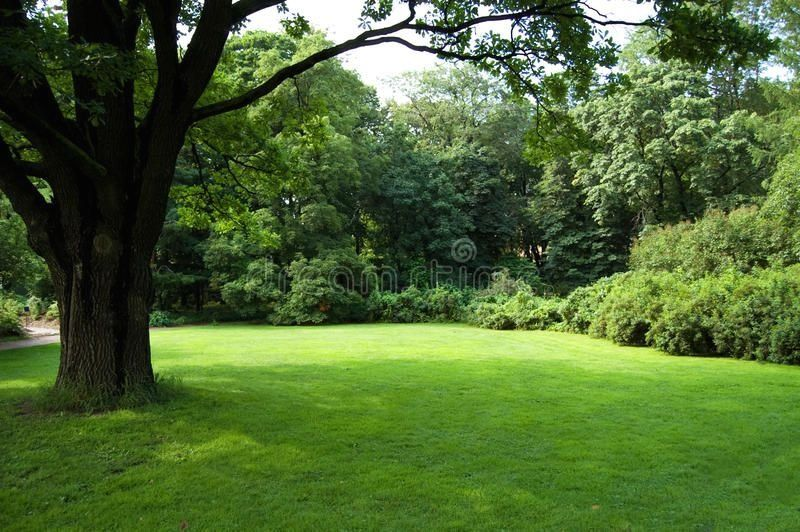 Lawn with an old tree stock photo. Image of outdoors