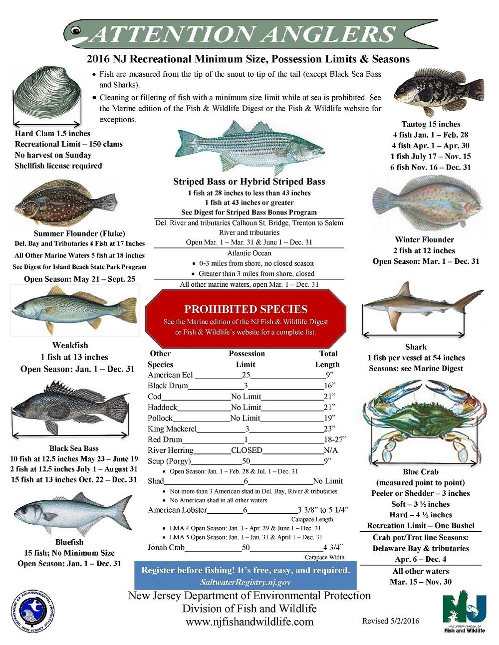 Nj saltwater fishing information nj fishing forums nj for Surf fishing nj