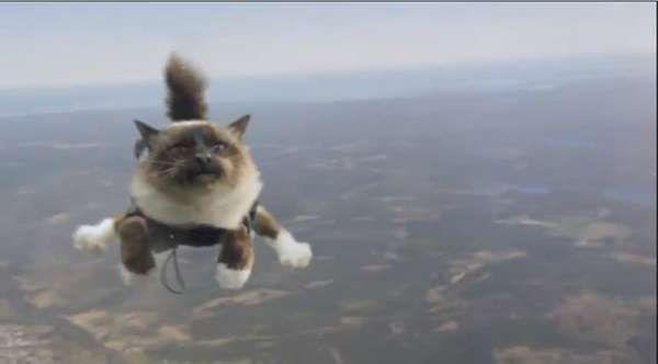 1394f5f459bcd68d88fa6aaddf5521b6 flying cat meme google search ceiling cat buybull pinterest