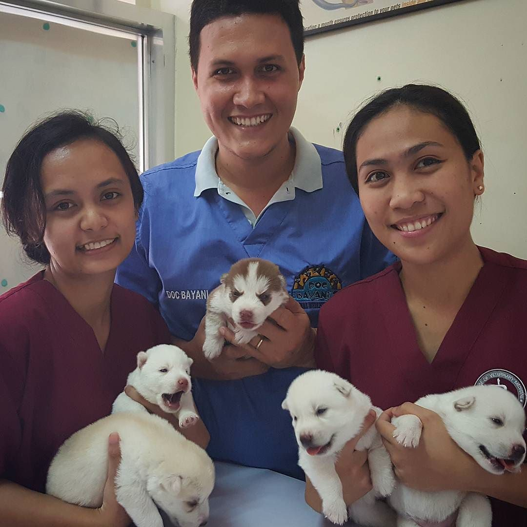 This litter of Siberian Husky puppies was brought to the clinic
