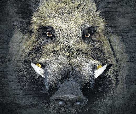 Was Tun Wenn Die Sau Kommt Con Imagenes Animales Seres Vivos Animales Gigantes