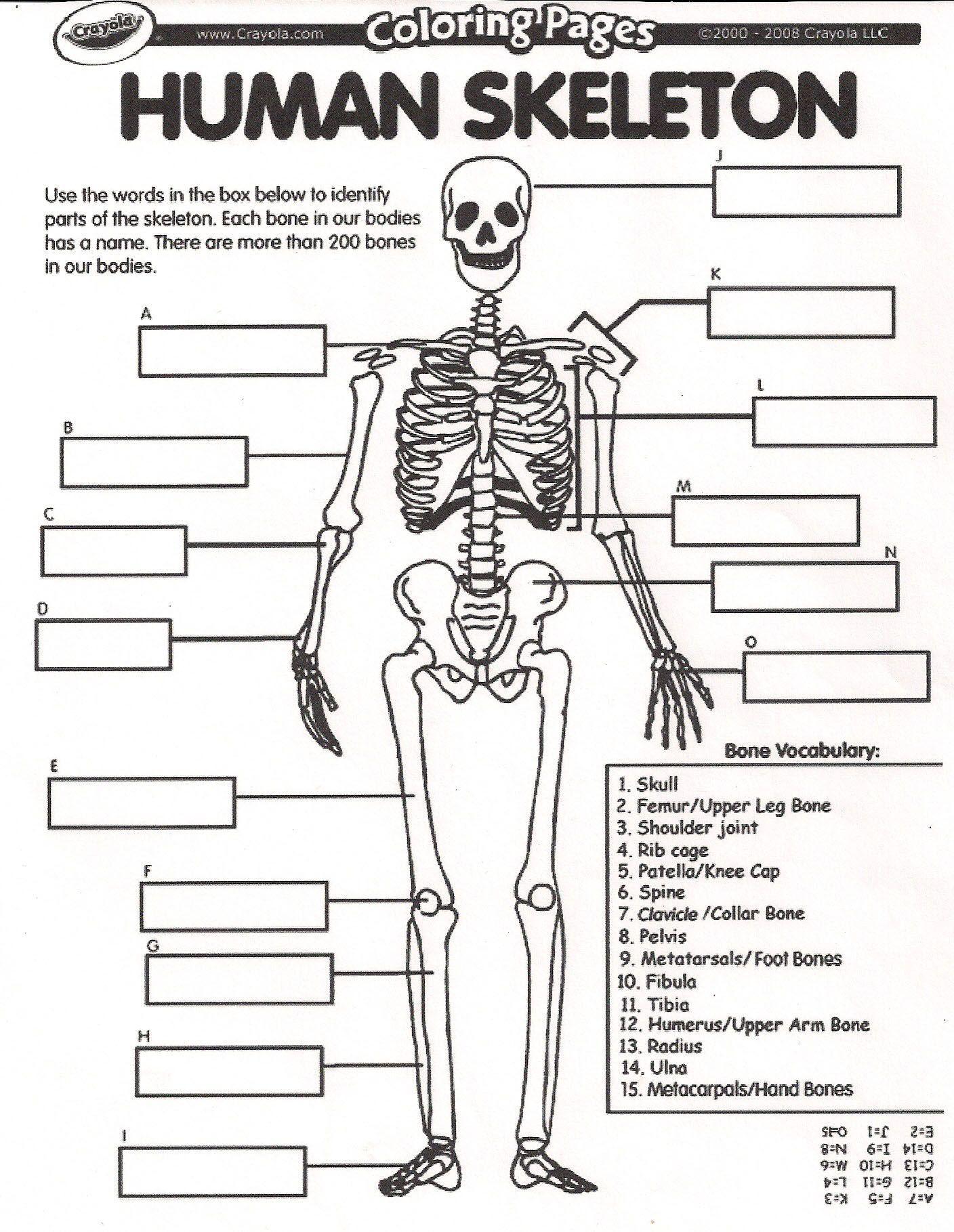 Skeleton Worksheet For Kindergarten