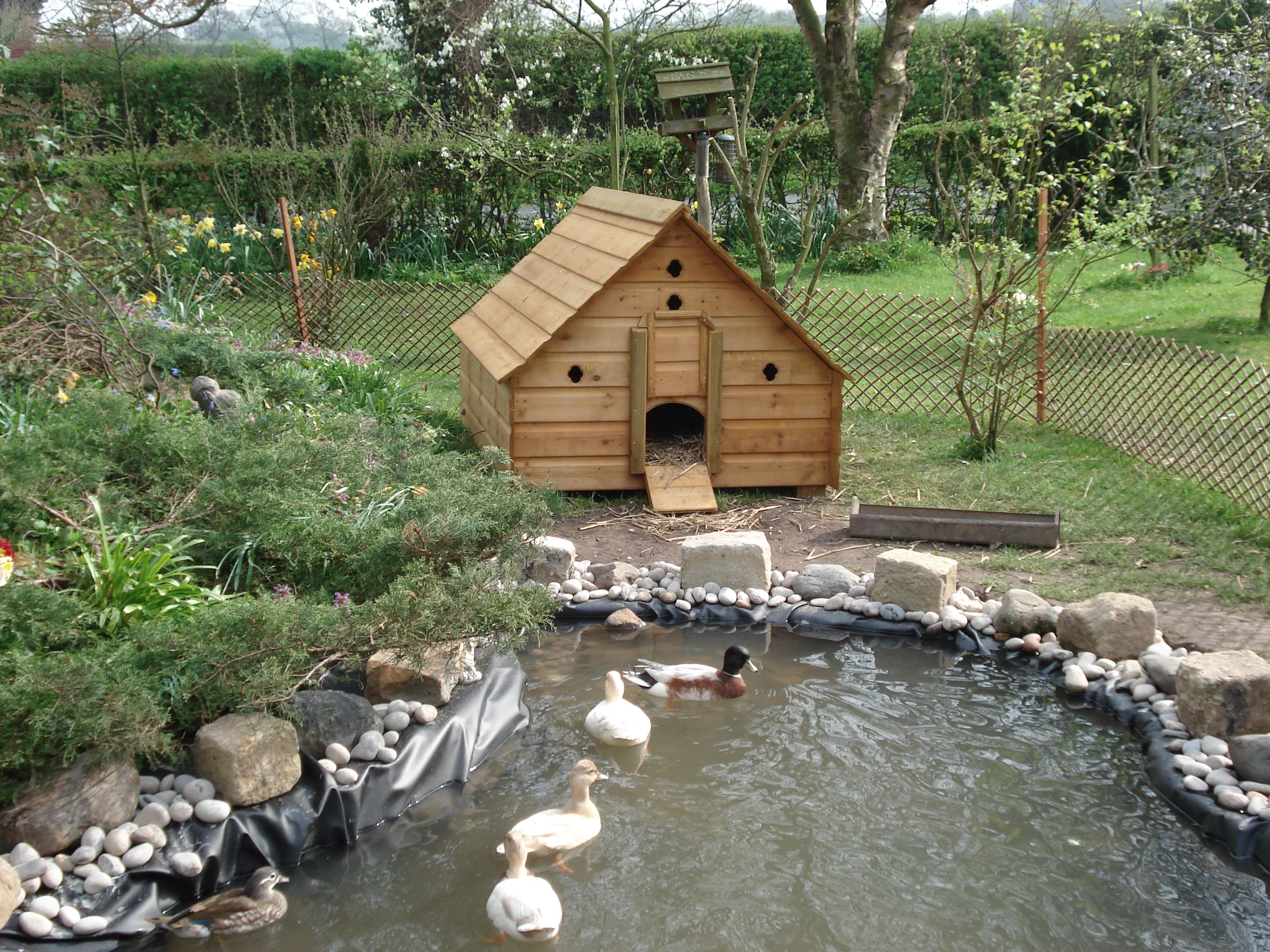 Backyard Duck Ponds this is more realistic on the look of our new duck area! | ducks