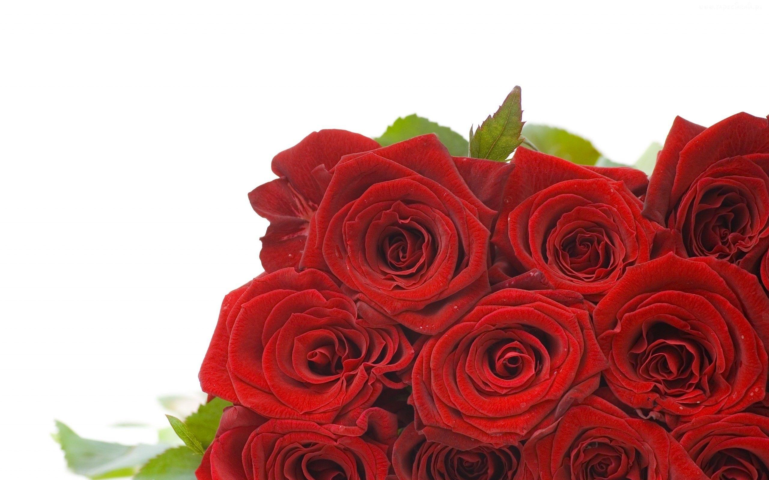 Edycja Tapety Bukiet Czerwonych Roz Tapety Tapeta Zdjecia Tapety Na Pulpit Flowers Bouquet Rose