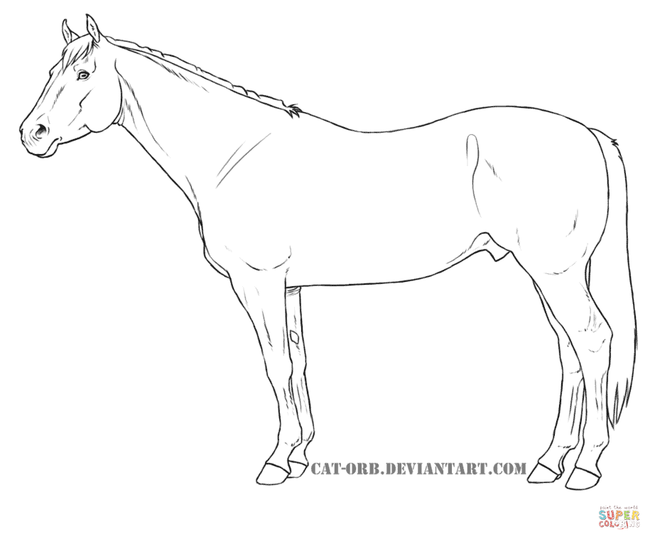 Quarter Horse coloring page | Free Printable Coloring Pages | Horse ...