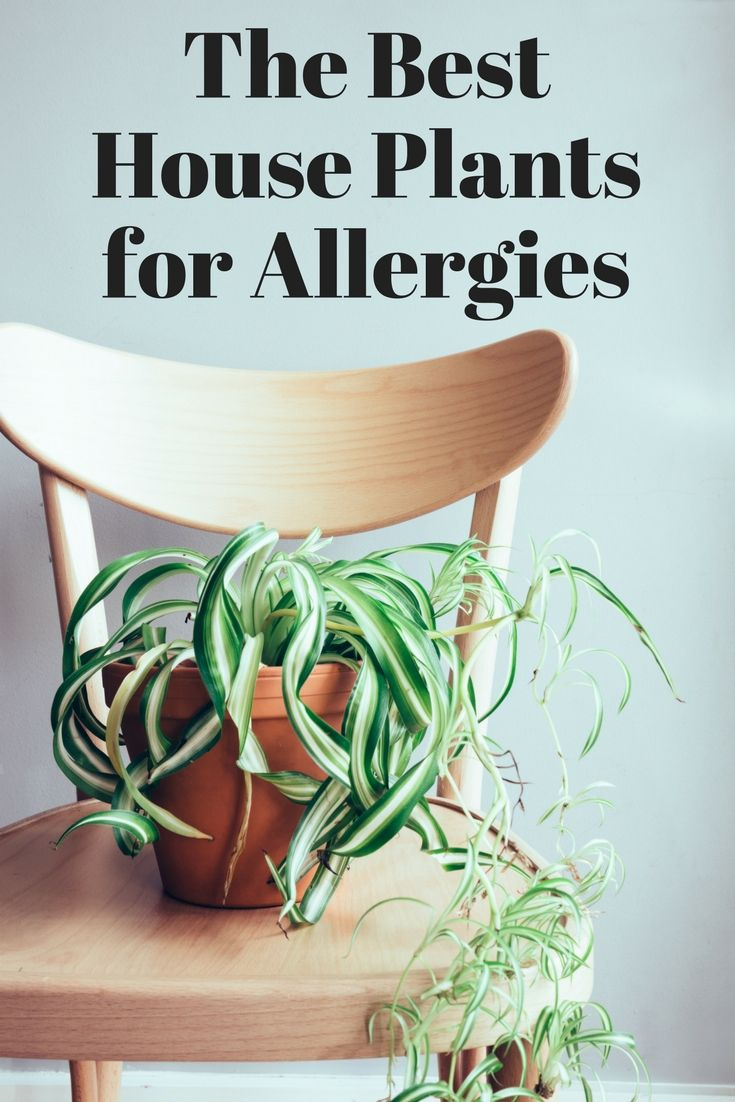 House Plants For Home Decor And Air Cleaning Diy Best Wiring Book Find The Those With Allergies These Actually Help To Clean