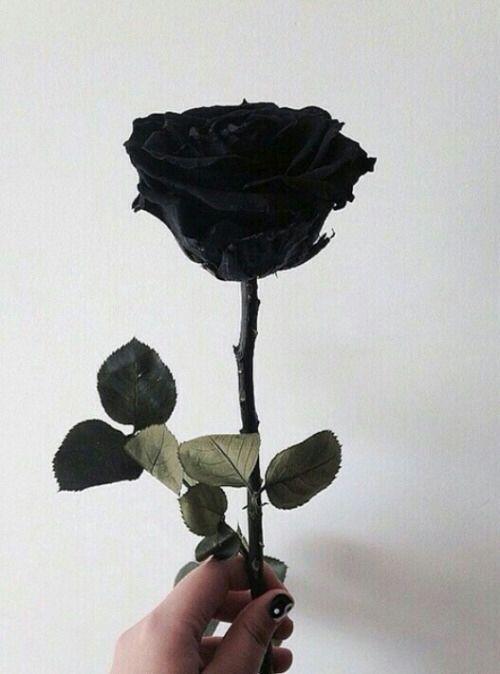 Be My Valentine Allblack Aesthetic Rose Black And White Aesthetic Black Aesthetic White Aesthetic
