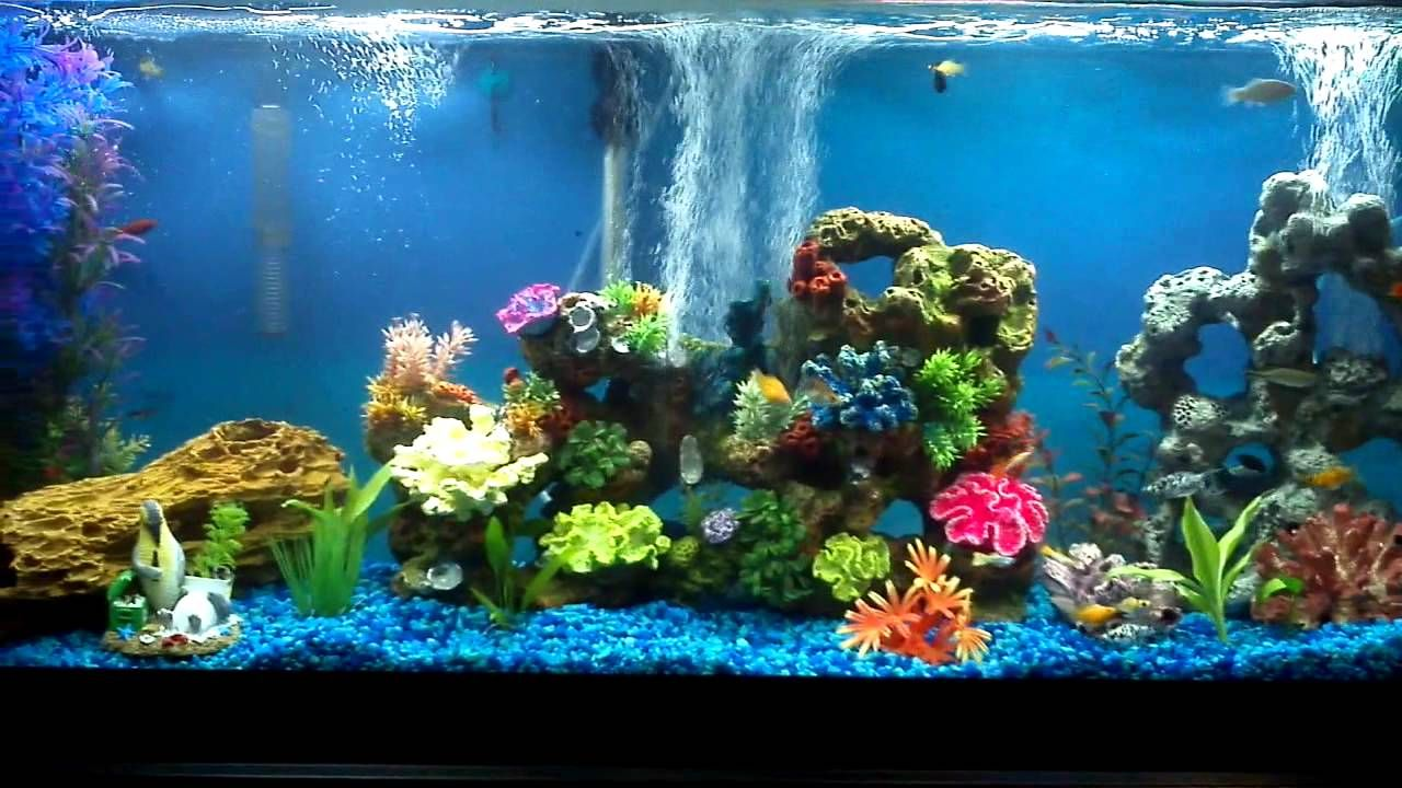 Freshwater fish tank upkeep - Fish