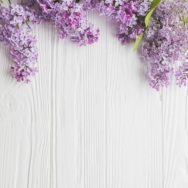 Download Close-up Lilac On White for free | Цветочные фоны ...