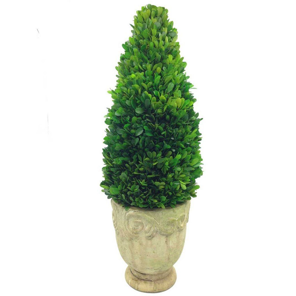 Preserved Boxwood Topiary in Ceramic Urn Planter